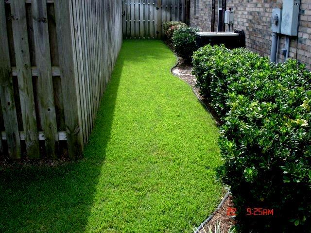 L A Toro Zoysia Grass